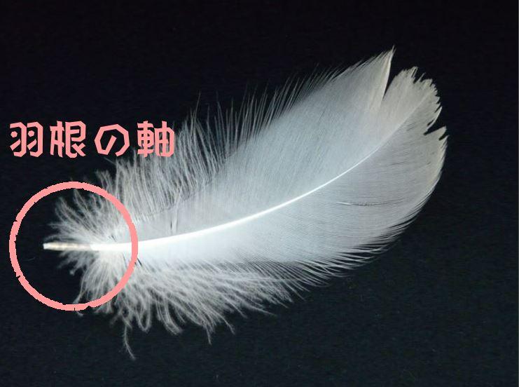 ダウンジャケット 羽毛の飛び出し 画像